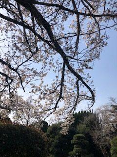 千葉県ゴルフ合宿|TMGA国内合宿 in 京葉CC 【2日目】